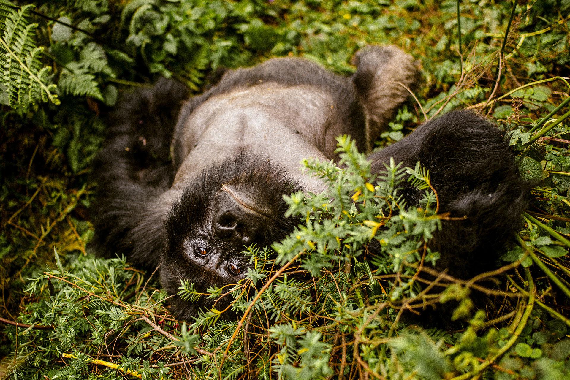 Rwanda_0027